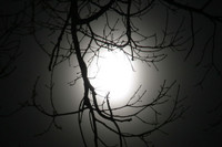 Titelbild des Albums: Mondfinsternis 2007